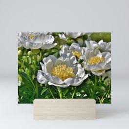 Peony Rose Bud Mini Art Print