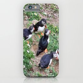Gossiping Puffins iPhone Case