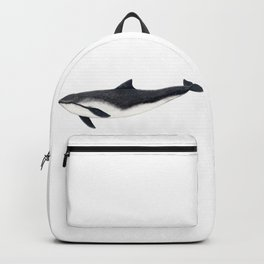 Harbour porpoise (Phocoena phocoena) Backpack