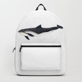 Harbour porpoise (Phocoena phocoena) Backpack
