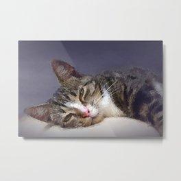 Cat 651 Metal Print