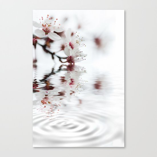 white cherry blossom and water reflection Canvas Print