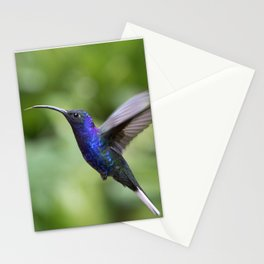 Violet Sabrewing Hummingbird in Flight Stationery Cards