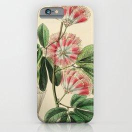 Flower 041 inga harrisii Mr Harris s Inga23 iPhone Case