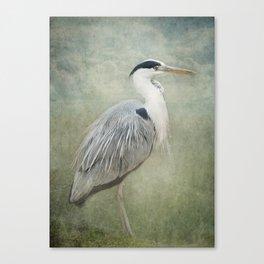 Cool Heron Canvas Print