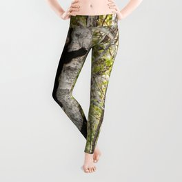 Baby Bears in a Tree Photography Print Leggings