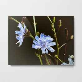 Roadside Flowers Metal Print