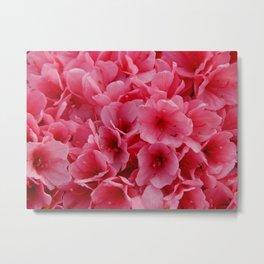 Close encounter pink azalea Metal Print