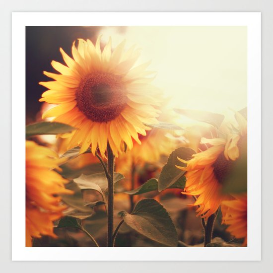Sunflower. Art Print