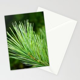 White pine branch Stationery Cards