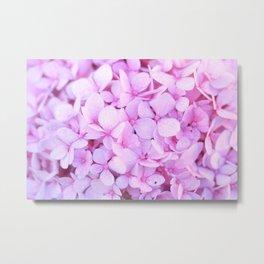 Pink Lavender Flowers : Hydrangea Metal Print