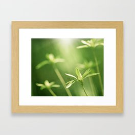 Green Nature Photography, Green Leaves Botanical Art Photo, Colorful Modern Print Framed Art Print