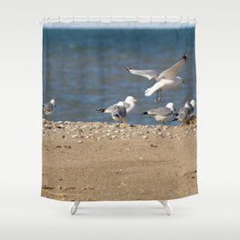 Landing | Seagull Photography Shower Curtain