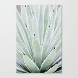 Mint Serenity Canvas Print