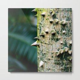 Thorny tree Botanical Photography Metal Print