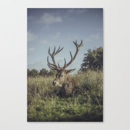 Sleeping Deer Canvas Print