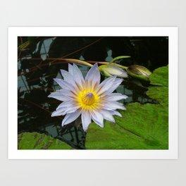 Flower Pic 4 Art Print