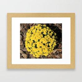 Bright Yellow Fall Mums Framed Art Print