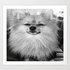 Black and White Pomeranian Art Print