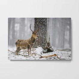 Red Deer in the Snow Metal Print