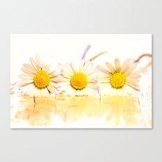 Sunny daisies Canvas Print