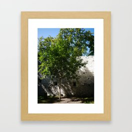 Tree inside Castle Ruin STEINHART Framed Art Print