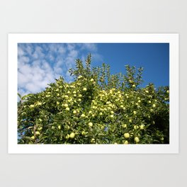 Green Apples & Blue Skies Art Print