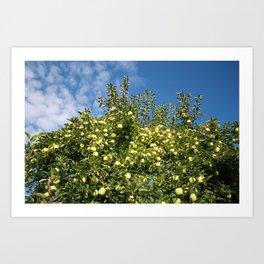 Green Apples & Blue Skies Art Print
