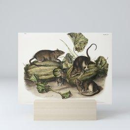Columbia Pouched Rat (Geomys douglassii) from the viviparous quadrupeds of North America (1845) illu Mini Art Print
