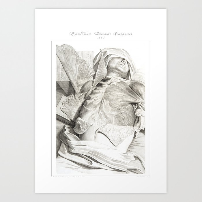 Human Anatomy Art Print Pectoralis Abdominals Muscle Vintage Anatomy