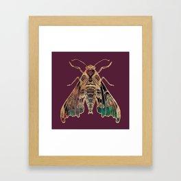 Sphinx Moth Framed Art Print