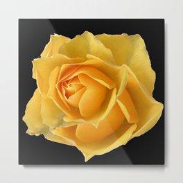 YELLOW ROSE OF TEXAS ON BLACK Metal Print