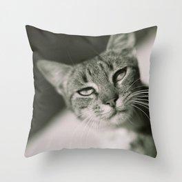 Beautiful Feline, Full of Sass Throw Pillow