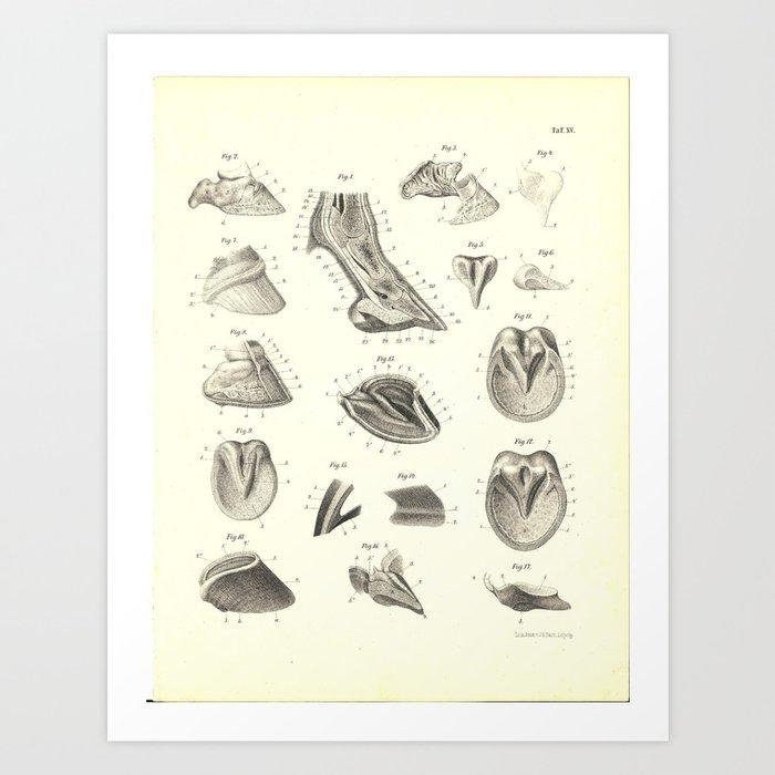 Hoof Foot Anatomy Of The Horse Print Art Print By Aburnski Society6