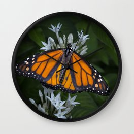 Monarch Butterfly Gathering Nectar Wall Clock