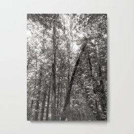 A forest of dreams Metal Print