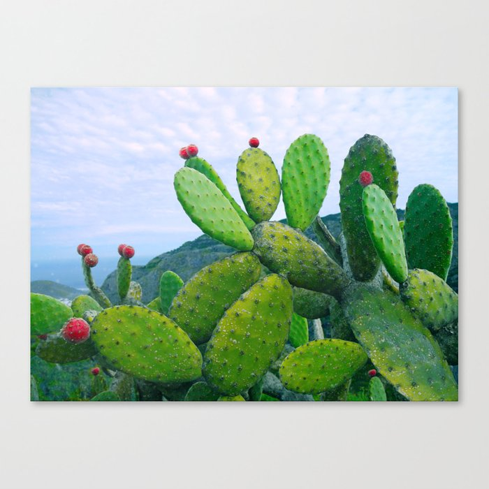 Blooming cacti Canvas Print