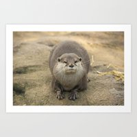 otter Art Prints featuring Otter   by Rob Hawkins Photography