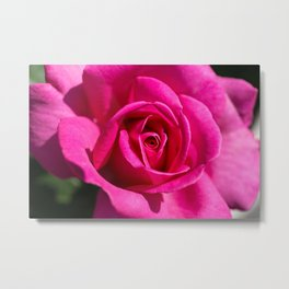 Rose - Pink Metal Print