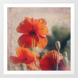 Red Poppies, Flowers Art Print