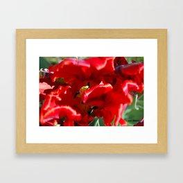 Brilliant Tulips Framed Art Print