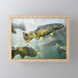 Trout Framed Mini Art Print