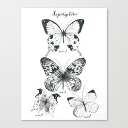 Lepidoptera Study Black & White Butterflies Canvas Print