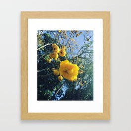 Double Buttercup Framed Art Print
