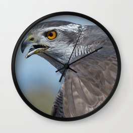Northern Goshawk Screeching Wall Clock