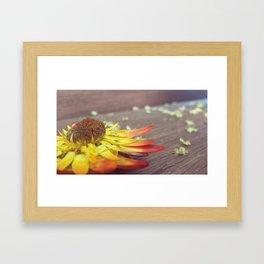 Many Suns Framed Art Print