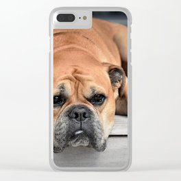 Bulldog waiting for family Clear iPhone Case