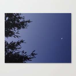 lights in the night sky Canvas Print