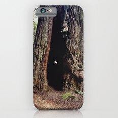 Inside A Redwood  iPhone 6s Slim Case