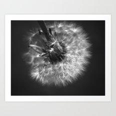 Dandy Dandelion Art Print